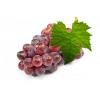 Виноград Скарлет Красный